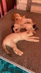 Doando 6 gatinho