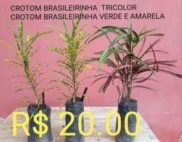 Loja online de plantas