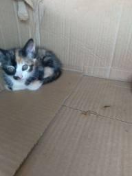 Doação responsável duas gatinhas
