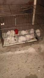 Rato Twister
