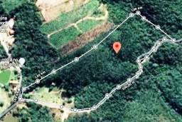 Floresta de Eucalipitos em Mairiporã / SP - 8 ha - 12 anos
