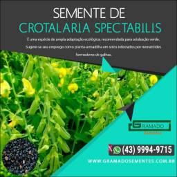 Semente de Crotalária Spectabilis R$ 13,50 o Kilo