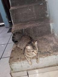 Doação de gato volta redonda santo agostinho
