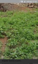 Carpelos quintal