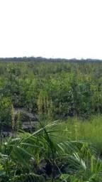 Fazenda de 6500 hectares em Caracarai/RR, ler descrição do anuncio