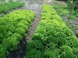Fazenda com 20 hectares no jardins com irrigação