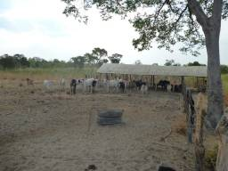 Vendo Imóvel Rural - Serra do Quilombo | Bom Jesus - PI