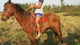 Cavalo mestiço manga larga com quarto de milha