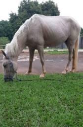 Cavalo piquira vermifugado