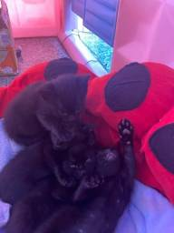 4 gatos machos filhotes para adoção