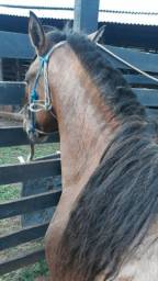 Cavalo Crioulo Venda/Troca