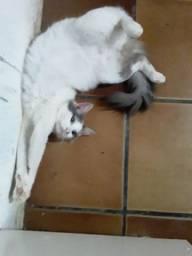 Adoção gata Suchi