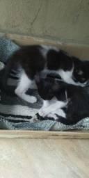 Doação de dois gatinhos