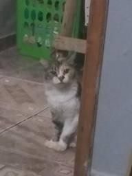 Estou doando esses dois gatinhos
