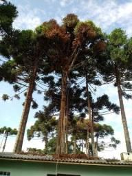 Corte e Podas de Árvores