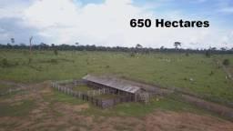 Fazenda com 650 hectares na Zona Rural de Nova Mamoré á Venda
