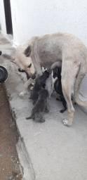 Adoção  filhotes