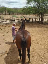 Égua Q.M com potro de 6 meses