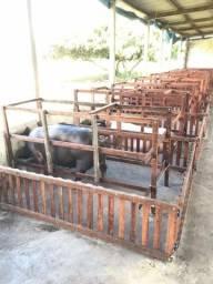 Gaiolas para parição de porca
