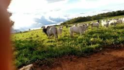 .  Fazenda 106 Alqueires 70 km de Palmas