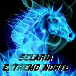 Selaria Extremo Norte(95991734992)