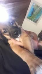 Cachorrinho lindo para doação