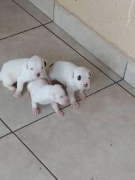 Filhotes de cachorro box