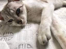 Doação gato gratis