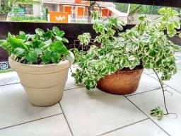 Vaso em Polietileno Granito Areia 20x20 cm + Vaso com Planta Incenso