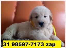 Canil Cães Filhotes BH Golden Pastor Labrador Dálmata Rottweiler Boxer Akita