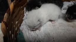 Doa se 4 filhotes de gato
