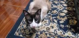 Adoção responsável gato