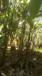 VENDO ÓTIMO sítio EM Ilha de sao João
