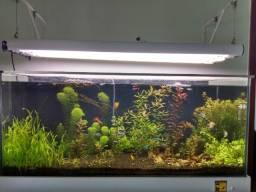 Vendo ou Troco aquário plantado de 300 litros para peixes por bicicleta MTB