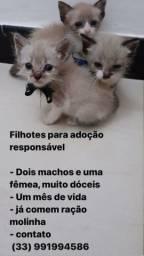Adoção responsável de gatinhos