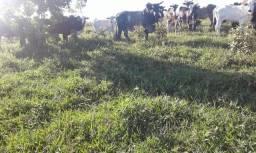 faz com 200 hectares na Bahia 280.000
