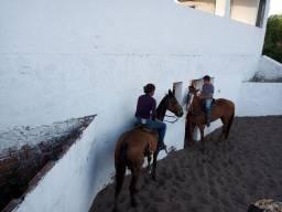 Escola de vaquejada, aluguel de cavalos para treinao de vaquejada