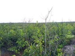 Fazenda de 12400 hectares em Caracarai/RR, ler descrição do anuncio