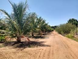 Área de 14 ha no Projeto Bebedouro - Petrolina