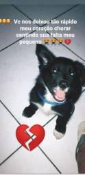 Comprou um cachorrinho que seja pequeno