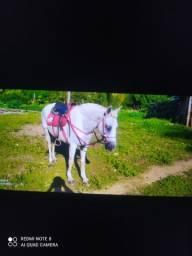Égua de 8 anos