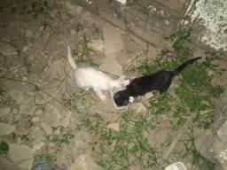 Doação duas gatinhas