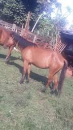 Vendo cavalo e egua
