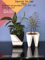 Vasos de cimento com plantas naturais