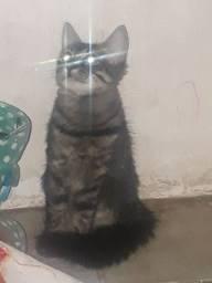 Doação de 2 lindas gatinhas