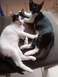 Lindas gatinhas disponível para adoção responsável