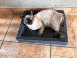 Cama gato espuma