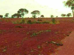. Uma Fazenda 222 alqueires em Santa Tereza Tocantins