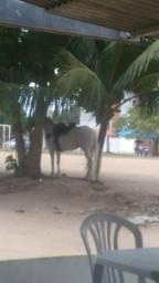 Vendo cavalo (83)986377032