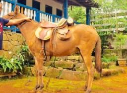 Linda mula de carroça muito mansa
